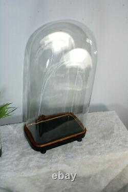 Antique French hand blown glass dome globe Taxidermy statue clock
